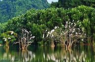 Tour Hà Nội - Hoa Lư - Tam Cốc - Vườn Chim Thung Nham - 2 Ngày 1 Đêm