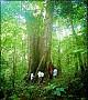 Tour Du Lịch Ninh Bình: Hà Nội - Hoa Lư - Tam Cốc - Cúc Phương (2 Ngày 1 Đêm)