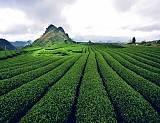 Những Điểm Du Lịch Hấp Dẫn Tại Sơn La,nhung diem du lich hap dan tai son la